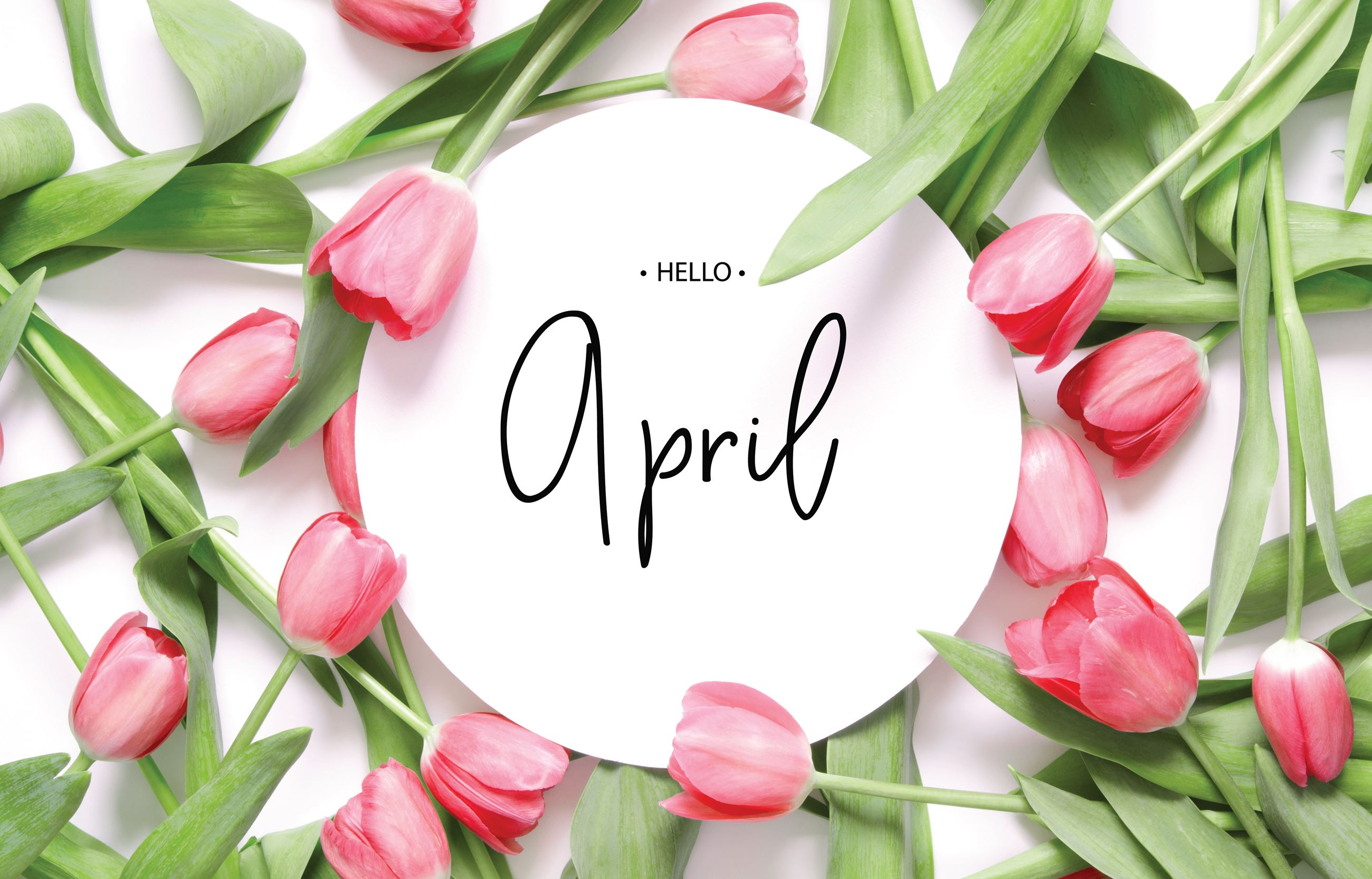 Hello April with pink tulips