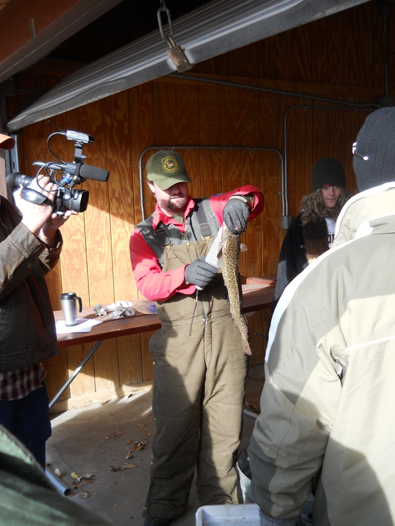 Photo fo check-in of burbot and checking the stomach contents during the final day of the 2012 Burbot Bash.