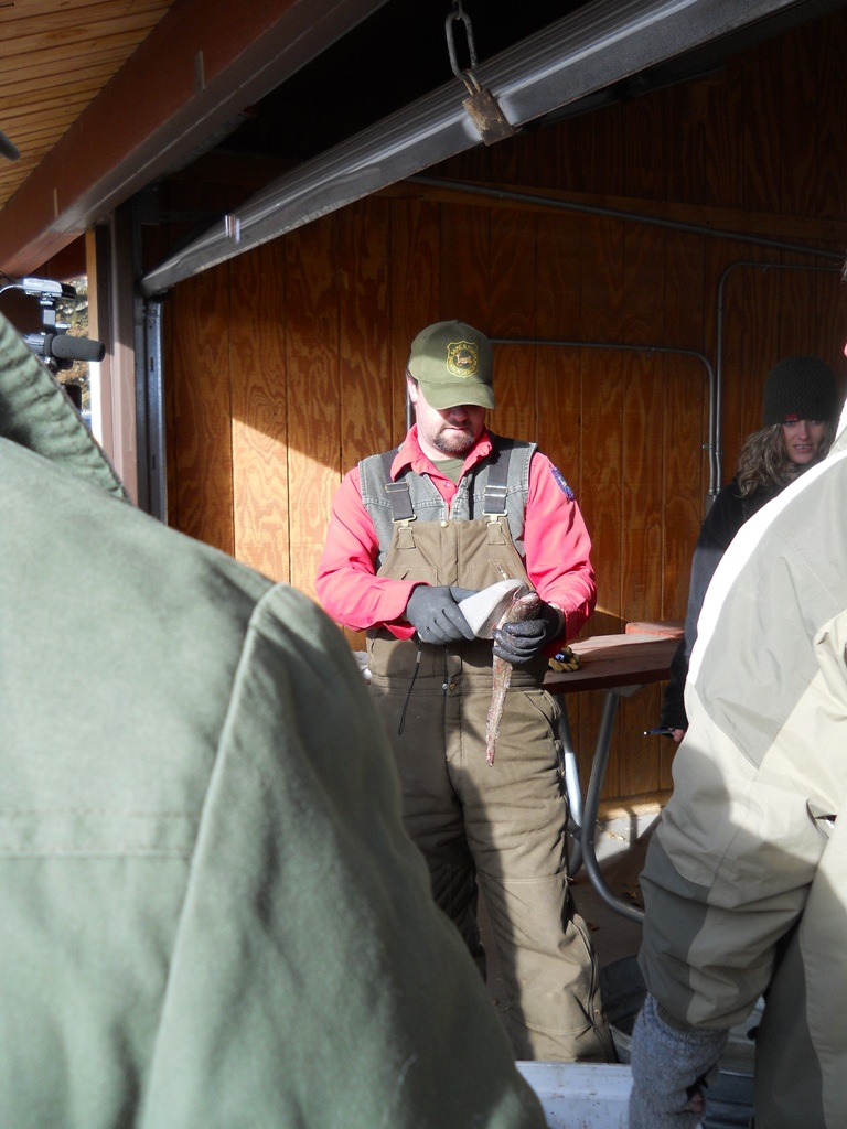 Photo of Wyoming Game and Fish helping with the Final Check in of burbot during the 2012 Burbot Bash