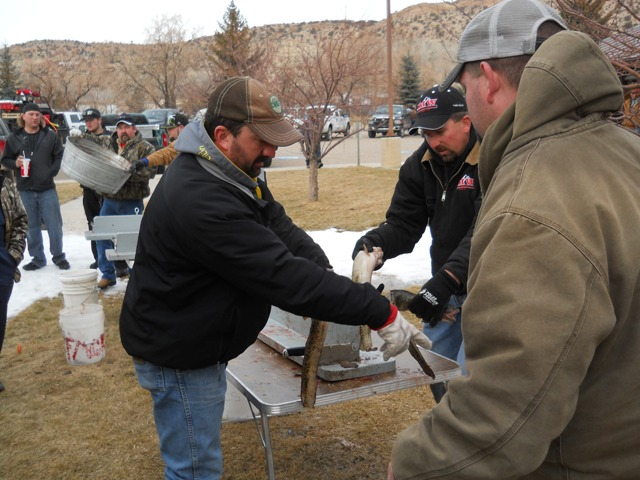 Photo of Burbot tails being cut off at Check-in during 2013 Burbot Bash