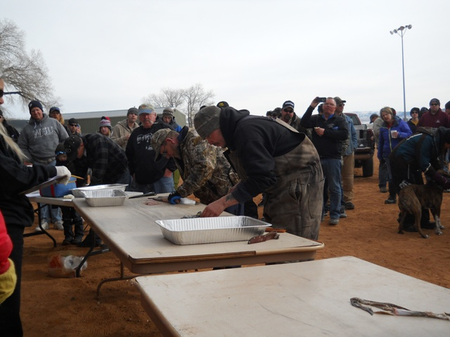 Photo of several Filet Contest participants fileting burbot during the Closing Ceremonies of the 2013 Burbot Bash.
