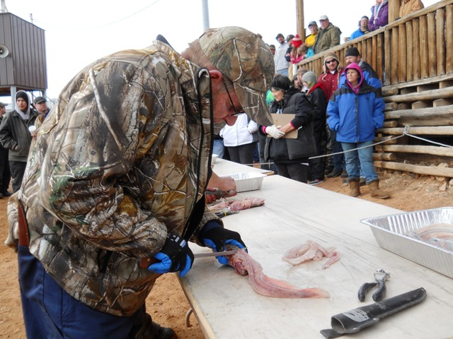 Photo of a Filet Contest participant fileting a burbot during the Closing Ceremonies of the 2013 Burbot Bash