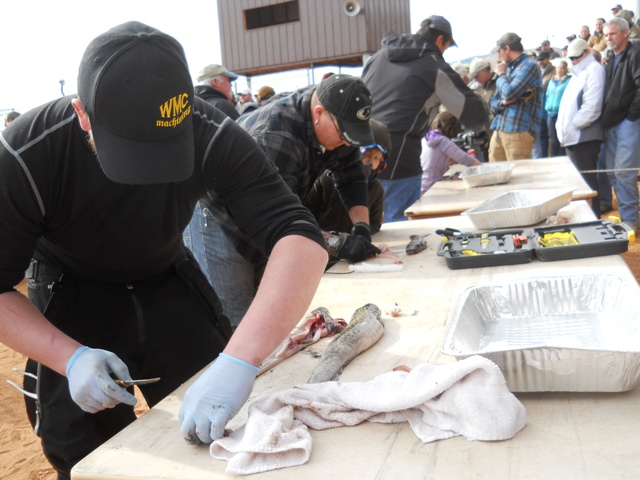 Photo of several Filet Contest participants fileting burbot during the Closing Ceremonies of the 2013 Burbot Bash